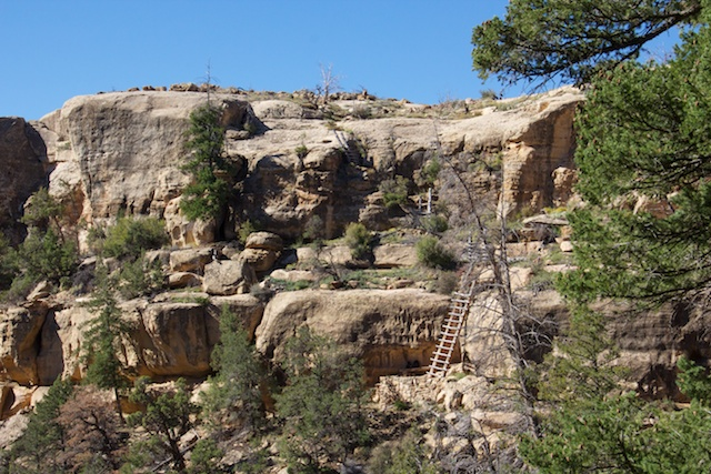 The Four Ladders Down (and Up) -- one must climb these to see the Cliff Dwellings.